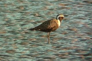 Bird watching on Morecambe bay