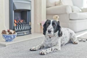 Dog Friendly Holiday Cottage in Grange-over-Sands