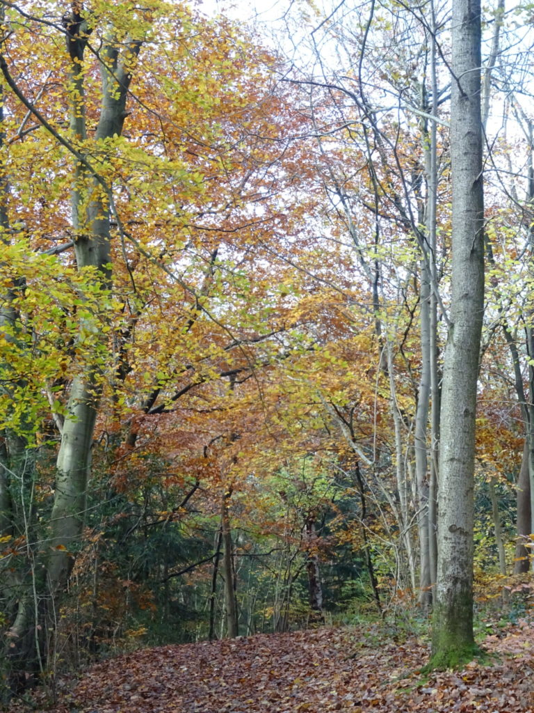 Stunning Lakeland Woods Walks