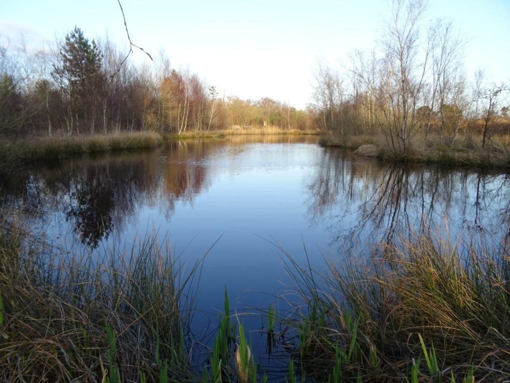 Foulshaw Moss Nature Reservee